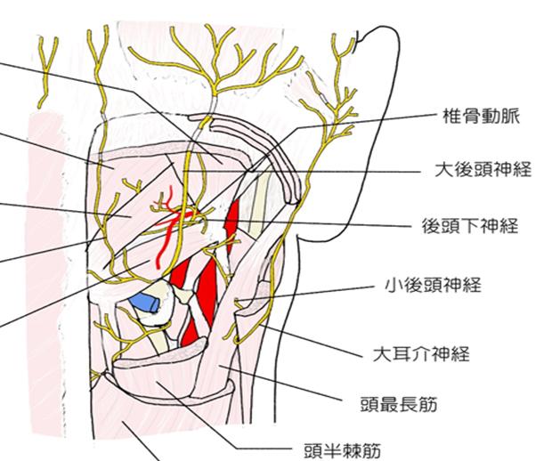 大後頭神経 2